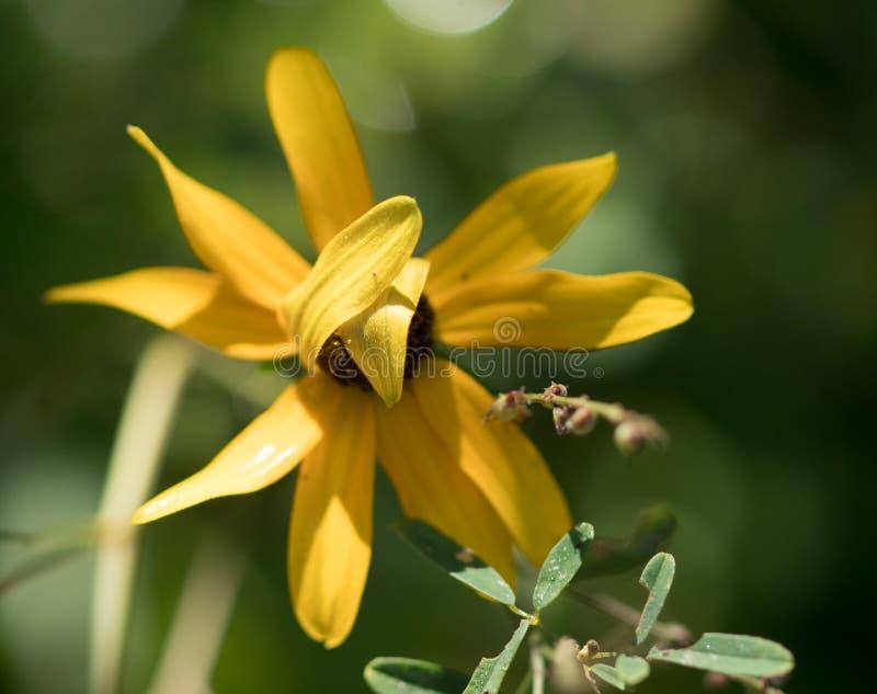 Shy flower stock photo