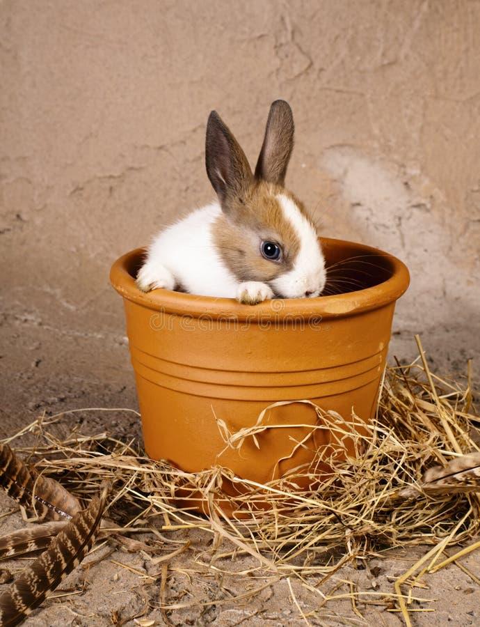 Shy rabbit in flowerpot stock photography