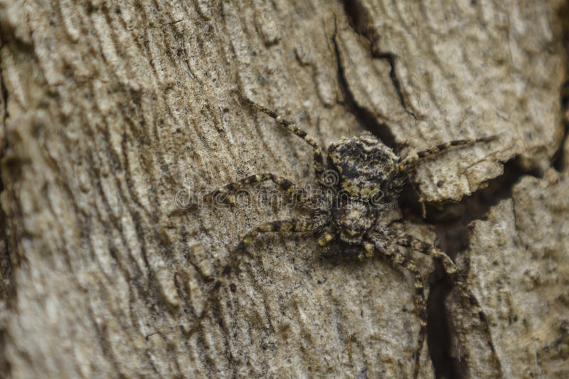 Shy Spider on a tree stock photo