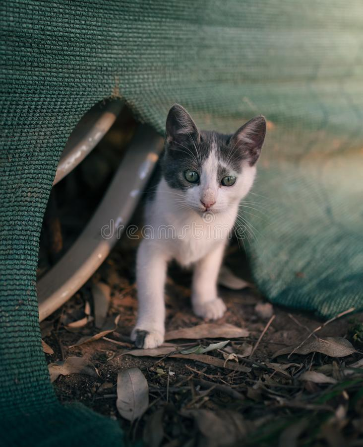 Shy stray kitty royalty free stock photography