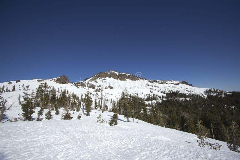 Siërra de sneeuwwaaiers van Nevada stock foto's