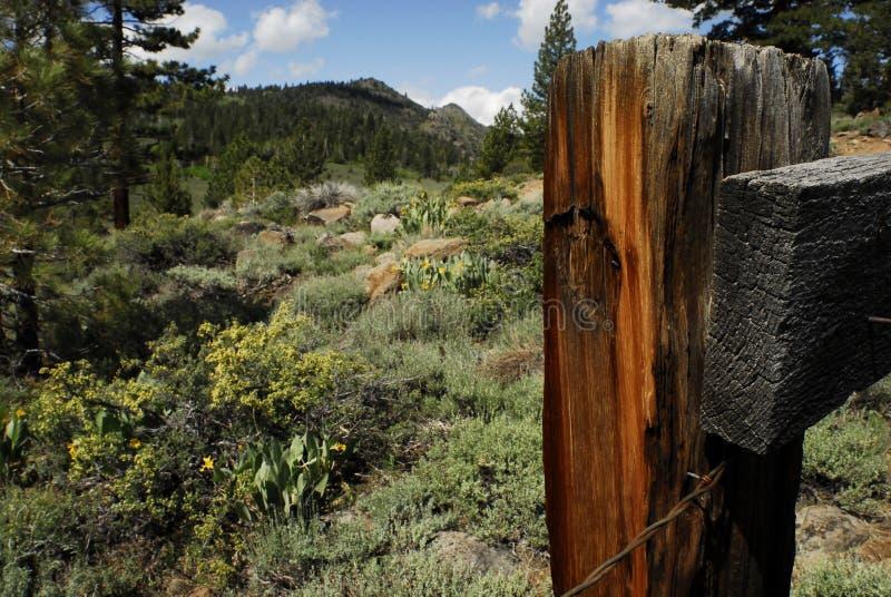 Siërra in Noordelijk Californië royalty-vrije stock foto's