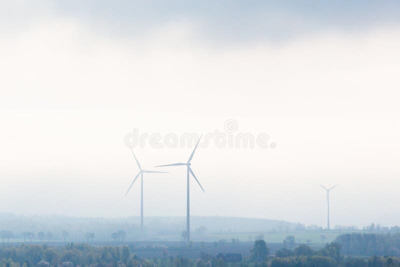 Sił wiatru rośliny zdjęcia stock
