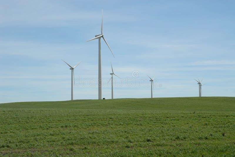 siła wiatru obraz royalty free