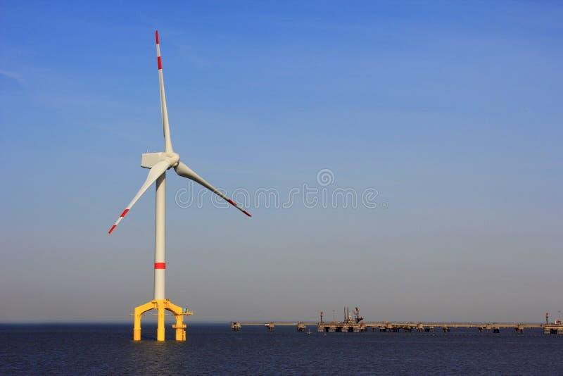 Siła wiatru na morzu roślina zdjęcie royalty free