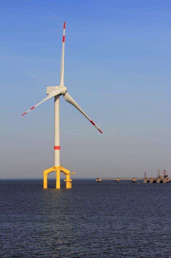 Siła wiatru na morzu roślina zdjęcia stock