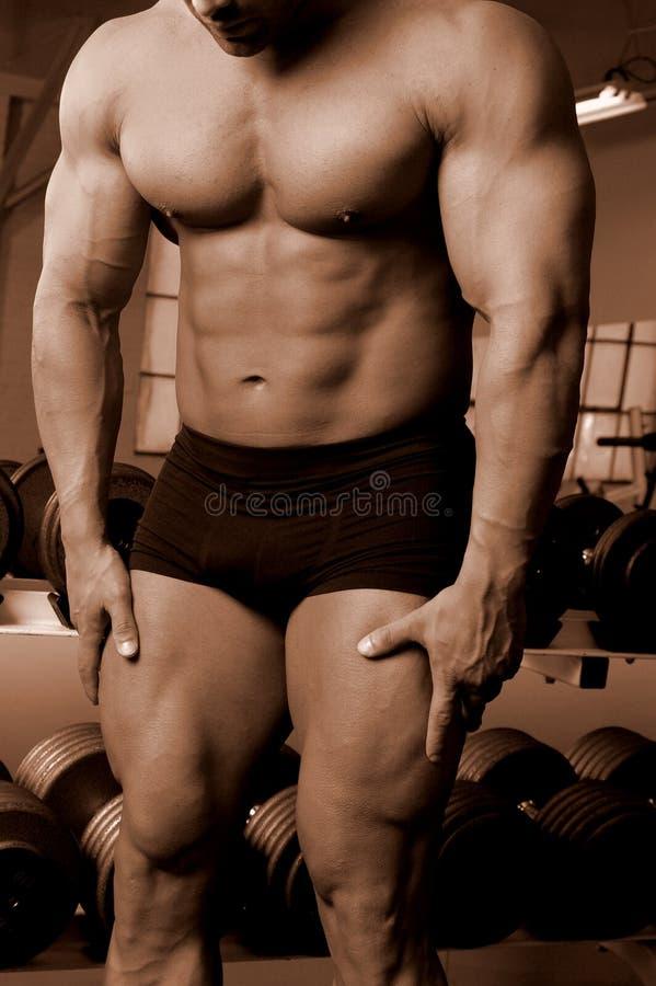 siłownia ciała obrazy royalty free