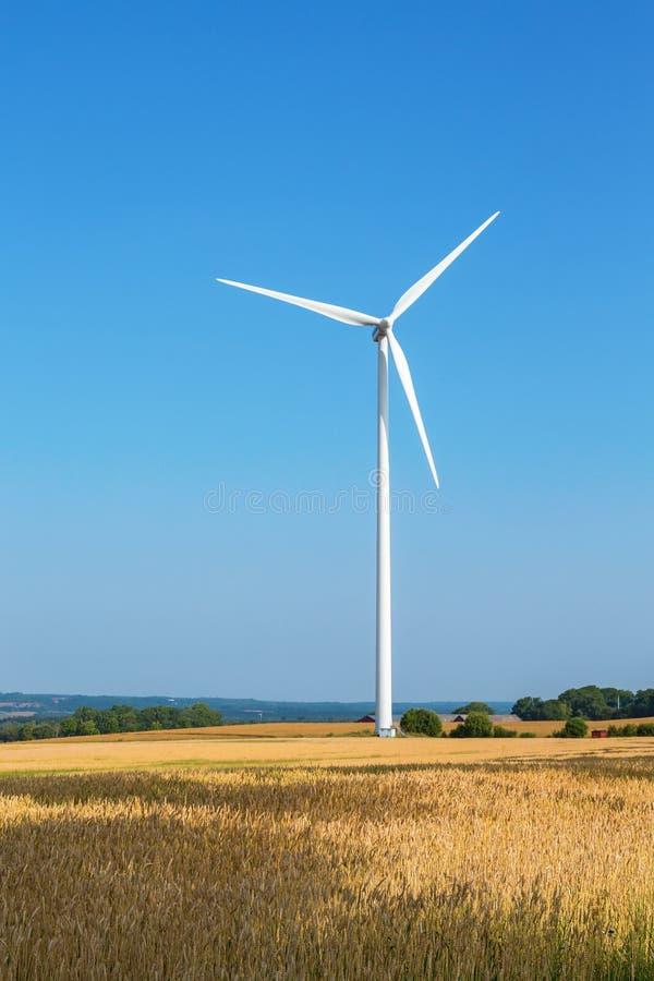 Siły wiatru roślina w polu uprawnym zdjęcie stock