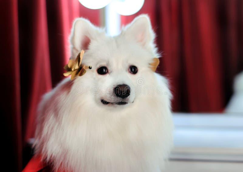 Si le chien est réussi, d'autres chiens ne le détestent pas image stock