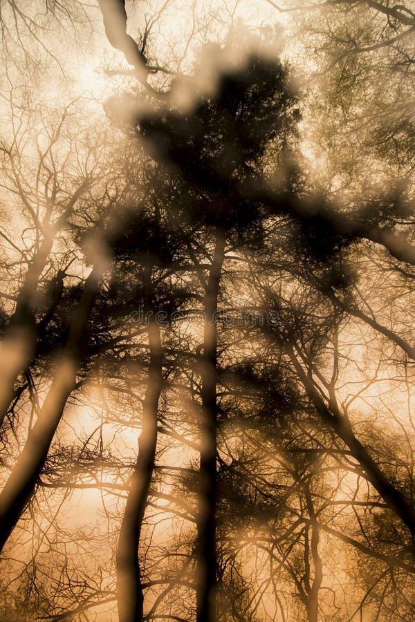 Si les arbres pourraient parler image libre de droits