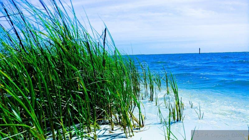 Si proche du bord mais de l'herbe est plus vert photos libres de droits
