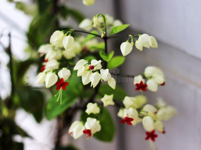 Si usted quiere al regalo a una muchacha algo confíe en que nada es más agradable que las flores fotografía de archivo libre de regalías