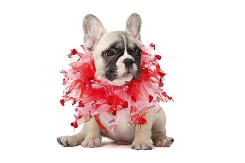 Download Sia Il Mio Biglietto Di S. Valentino Immagine Stock - Immagine di canino, studio: 23119921