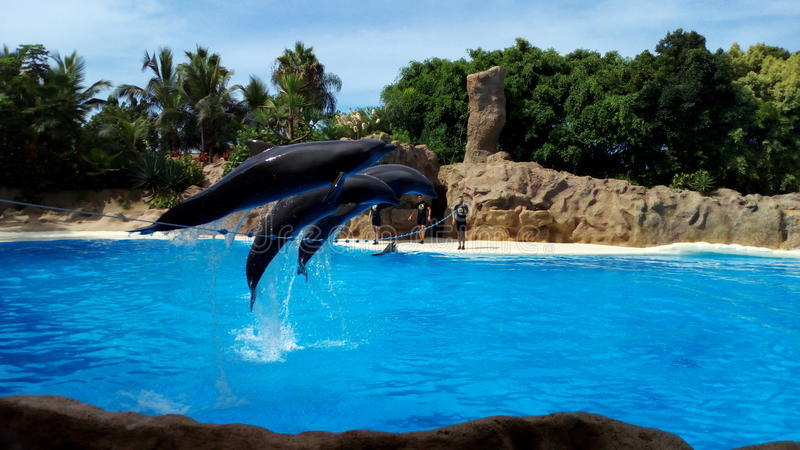 Siam park royalty free stock photography