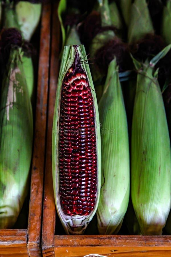 Siam rubinowa królowa lub czerwieni kukurudza Tajlandia jesteśmy typem słodka kukurudza, Czerwona słodka kukurudza obrazy royalty free