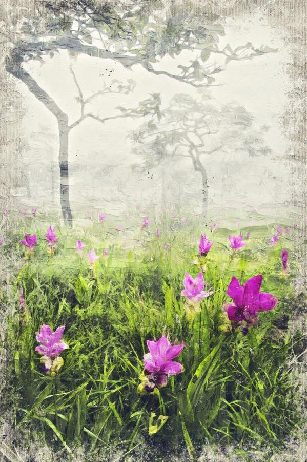 Siam Tulip Field dans le matin brumeux, Thaïlande Digital Art Impasto images libres de droits