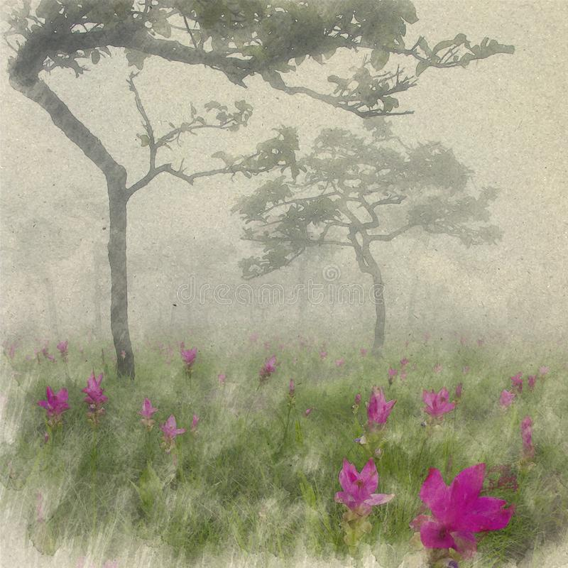 Siam Tulip Field in misty morning. Digital Art watercolor on vintage paper created by Photographer. stock image