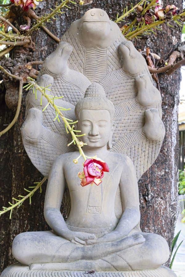 Siamensis del Shorea delante de la estatua de Buda imagen de archivo