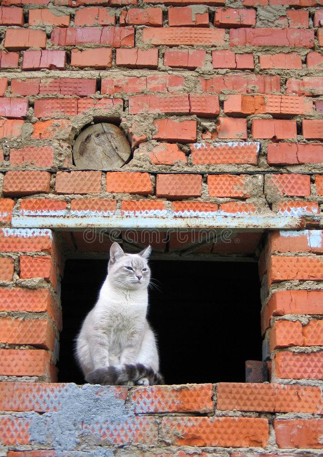 Download The Siamese stock photo. Image of bricklaying, careless - 510978