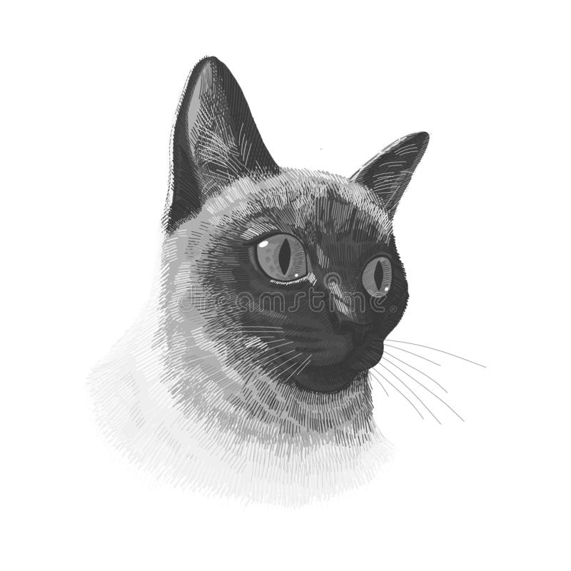 Siamese cat animal cute black and white face. Vector funny happy cat head portrait. Realistic fur portrait of thai stock illustration