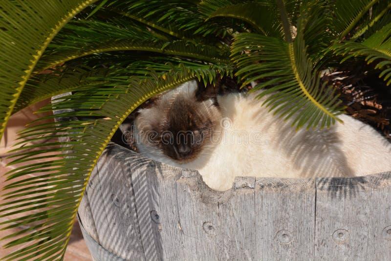 Siamese cat asleep in a garden tub stock image