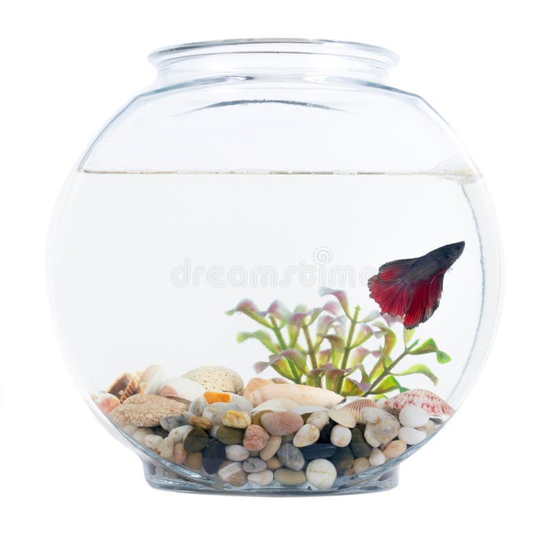 how to breed betta fish in a bowl
