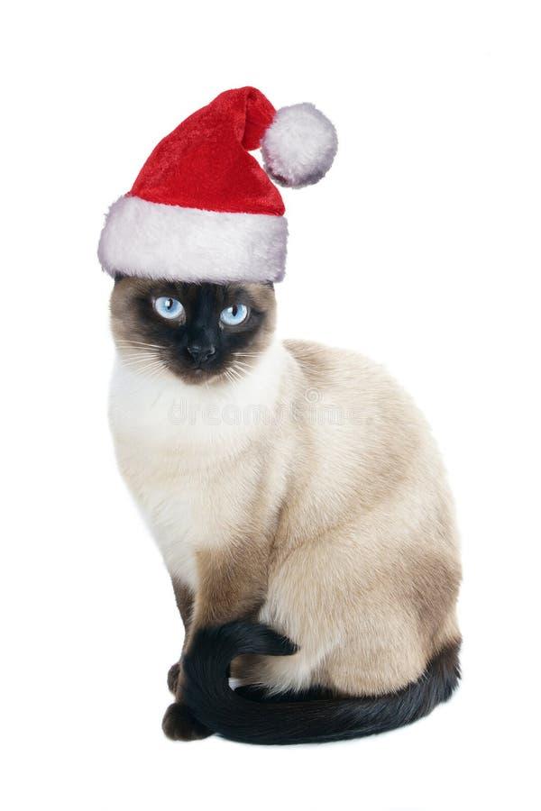 Siamese katt som bär den santa hatten för jul arkivfoton