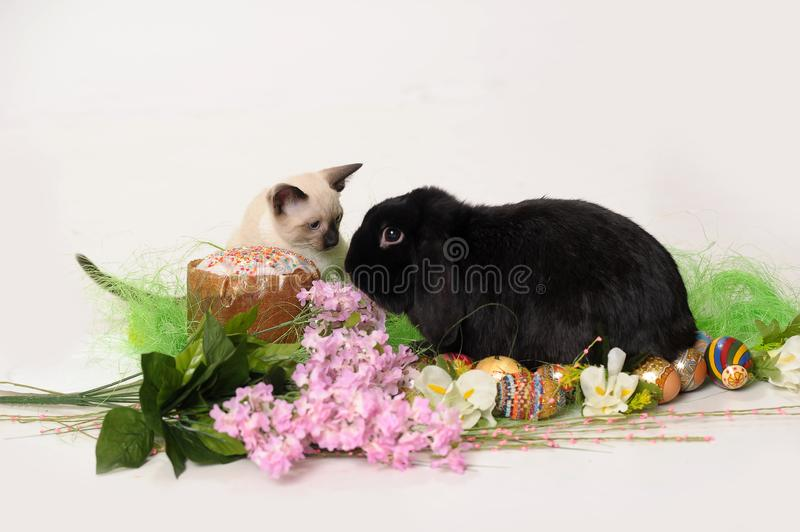 Siamese kitten and black rabbit on a white background with a lilac, royalty free stock photo