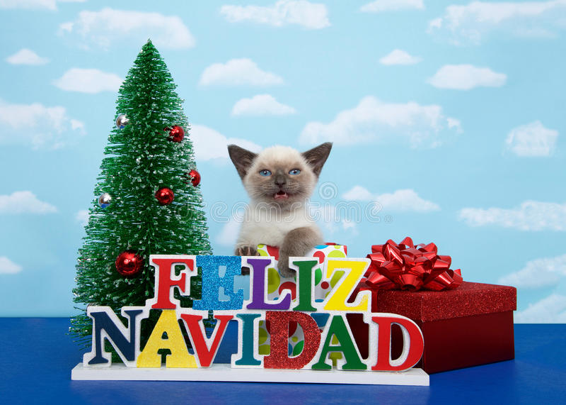 Siamese kitten wishing Merry Christmas in Spanish stock images