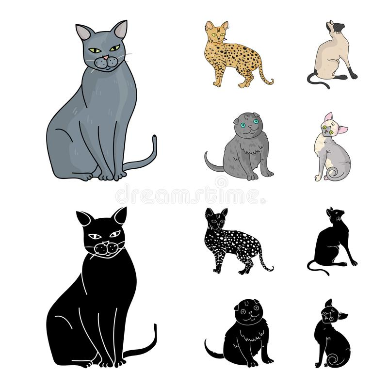 Siamese And Other Species Cat Breeds Set Collection Icons In