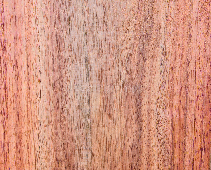 Siamese Rosewood stock image