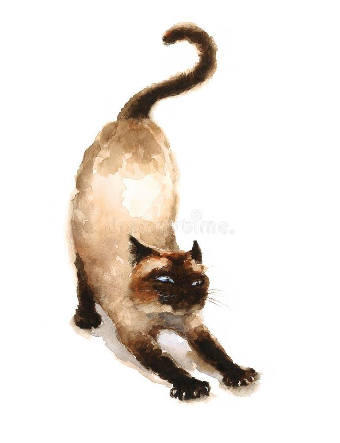 Siamesische Cat Stretching Watercolor Animals Pets-Illustration handgemalt lizenzfreie abbildung