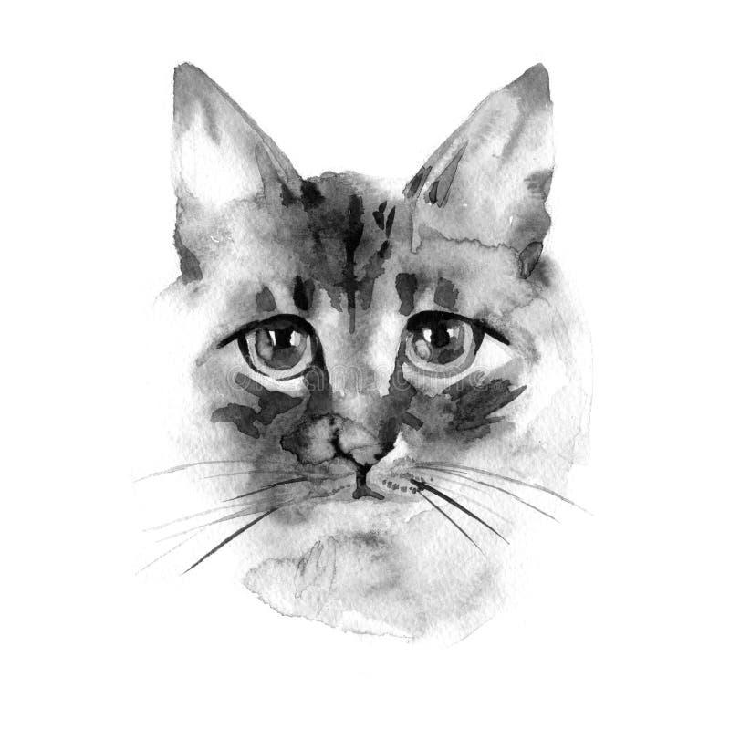 Siamesische langhaarige Katze Balinesekatze Katzenhintergrund Aquarellhand gezeichnet lizenzfreie abbildung
