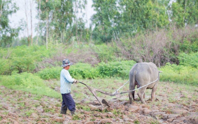 Siamesischer Landwirt lizenzfreie stockfotos