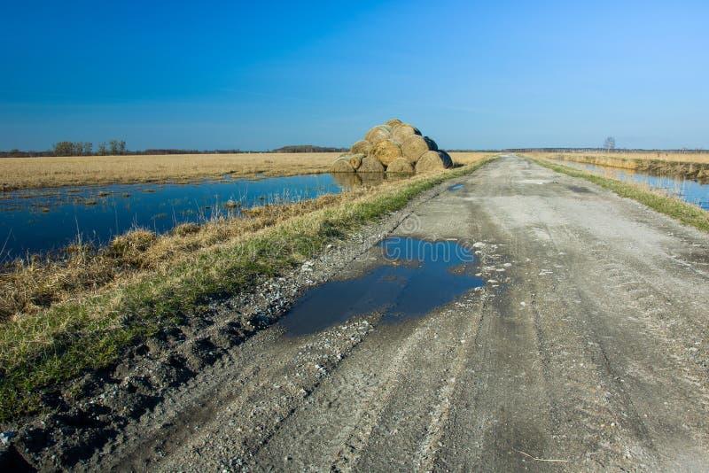 Siano bele na zalewającej wiejskiej drodze i polu obrazy royalty free