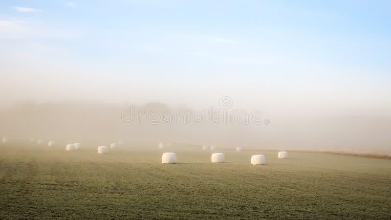 Siano bele w mgłowym krajobrazie fotografia stock