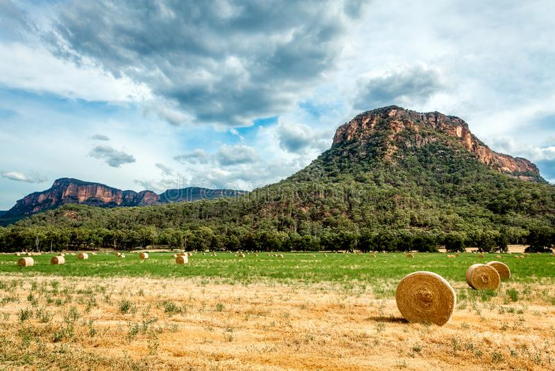 Siano bele w polach w wiejskim Australia fotografia royalty free