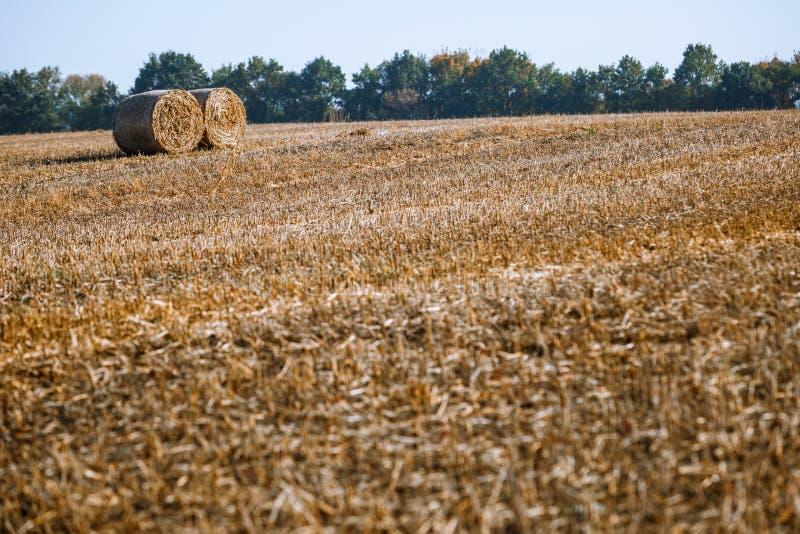 Siano kaucja zbiera w cudownym jesień rolników pola krajobrazie z siano stertami zdjęcie royalty free