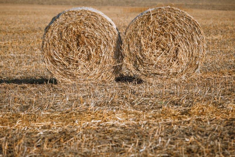 Siano kaucja zbiera w cudownym jesień rolników pola krajobrazie z siano stertami fotografia stock