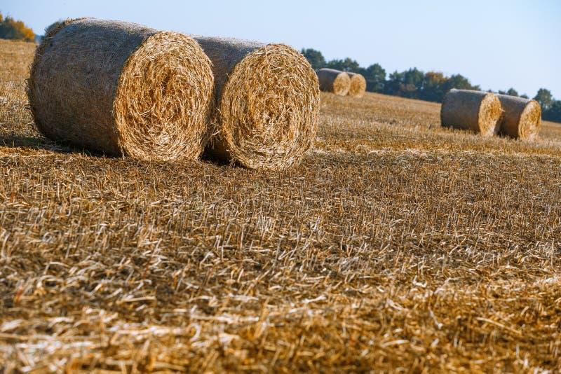 Siano kaucja zbiera w cudownym jesień rolników pola krajobrazie z siano stertami zdjęcia royalty free