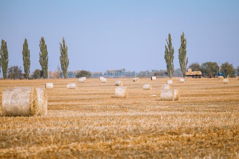 Siano kaucja zbiera w cudownym jesień rolników pola krajobrazie obrazy stock