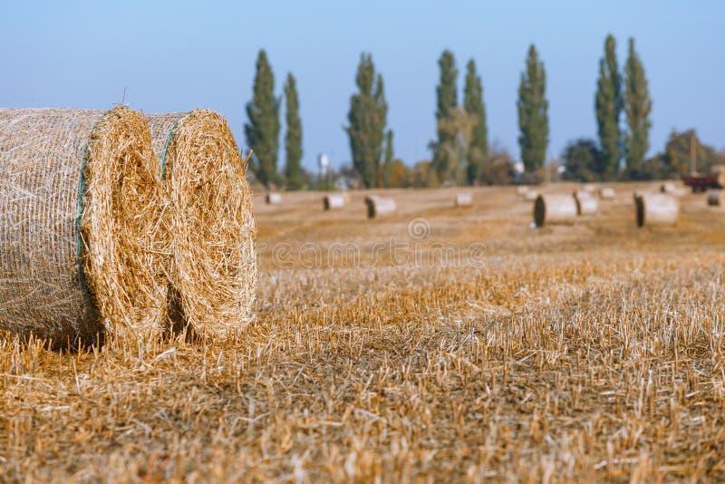 Siano kaucja zbiera w cudownym jesie? rolnik?w pola krajobrazie z siano stertami fotografia royalty free