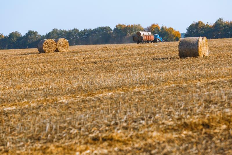 Siano kaucja zbiera w cudownym jesie? rolnik?w pola krajobrazie z siano stertami fotografia stock
