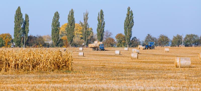 Siano kaucja zbiera w cudownym jesie? rolnik?w pola krajobrazie z siano stertami zdjęcie royalty free