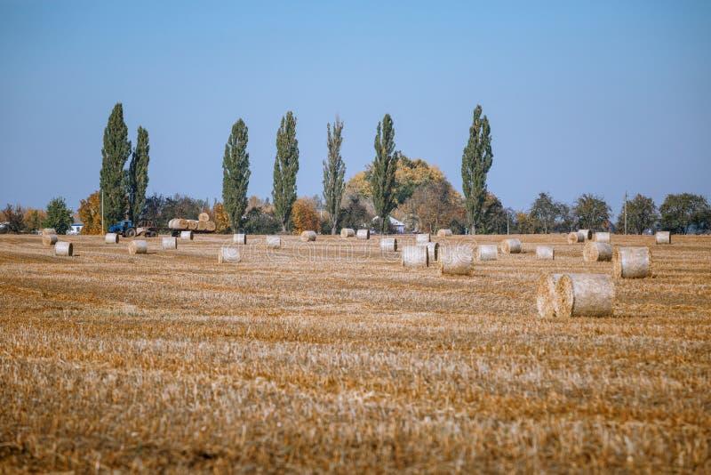 Siano kaucja zbiera w cudownym jesie? rolnik?w pola krajobrazie z siano stertami obraz royalty free