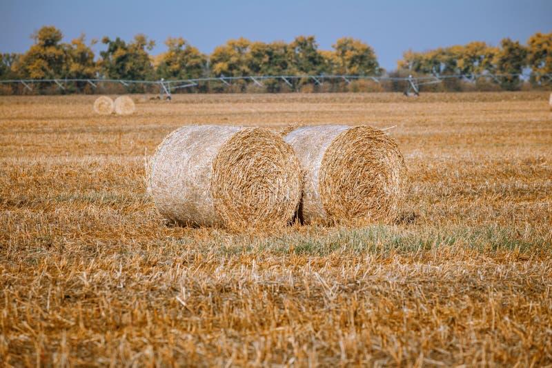 Siano kaucja zbiera w cudownym jesie? rolnik?w pola krajobrazie z siano stertami obrazy royalty free