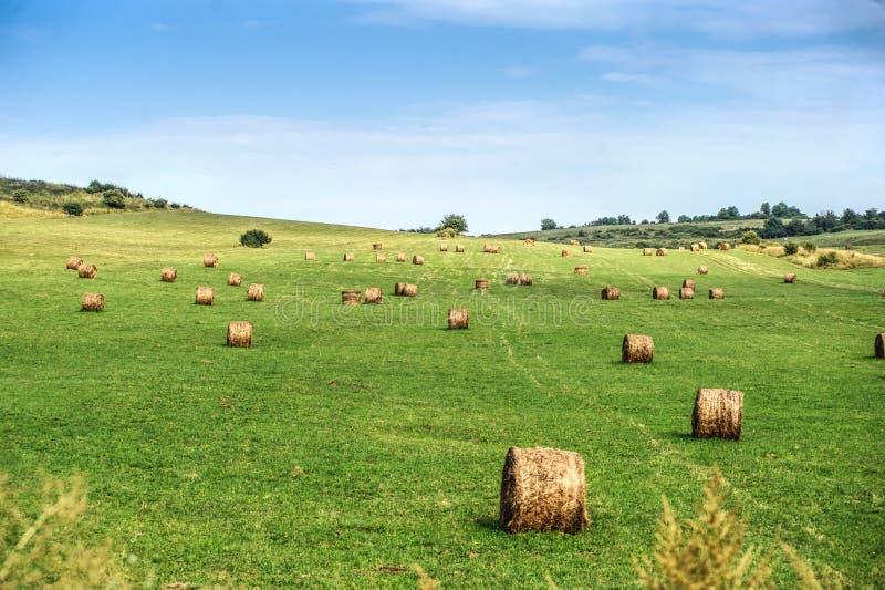 Siano kaucja zbiera w złotym pole krajobrazie obraz stock
