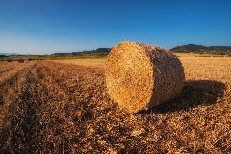 Siano kaucja zbiera w złotym pole krajobrazie obrazy stock