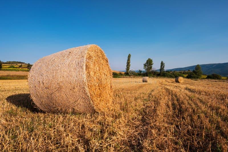 Siano kaucja zbiera w złotym pole krajobrazie zdjęcia stock