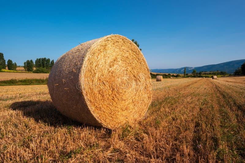 Siano kaucja zbiera w złotym pole krajobrazie fotografia stock